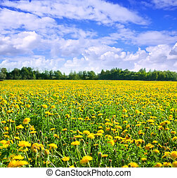 Meadow with yellow dandelions. Background of flowers