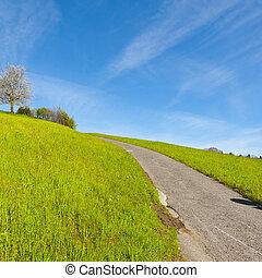Meadows and flowering trees - Narrow asphalt road between...