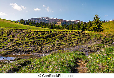 meadows and spruce forest on hills. beautiful springtime...