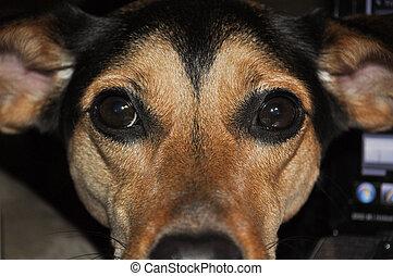meagle, mirar fijamente
