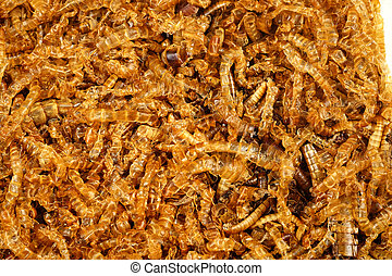 mealworm dead