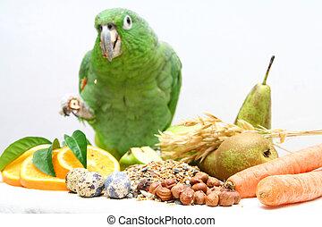 Mealy Amazon parrot, Amazona farinosa eating of a white background