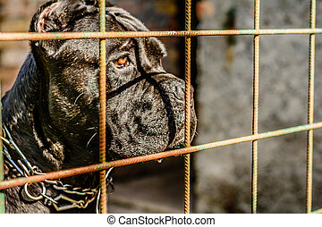 Mean dog looking through the fence
