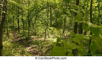 Meandering Path through Wood - Meandering path through wood.