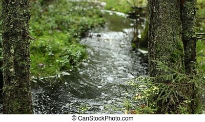 meandering stream in green rainforest with sound, trees in...