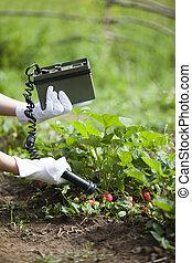 Measuring radiation levels of fruits