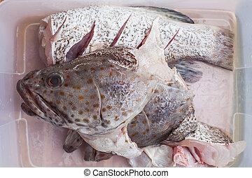meat of freshness grouper fish in sea food market preparing ...