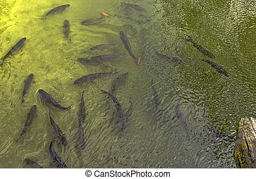 meaux, フルである, 航空写真, marne, -, フランス, 川, fish, 光景
