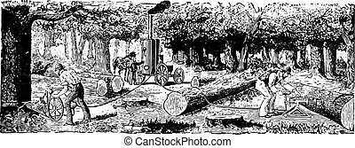 Mechanical cutting of trees, vintage engraving.