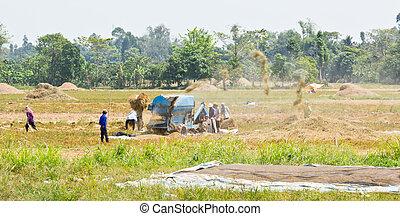 Mechanical rice threshing - Local community sharing the use...