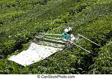 Mechanised Tea Leaf Harvester - Image of a mechanised tea...