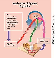 Mechanisms of appetite regulation - Medical diagram showing...