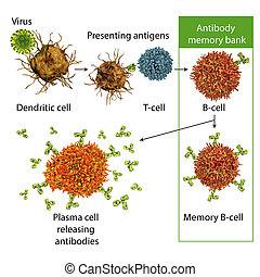 Mechanisms of immune defense against viruses