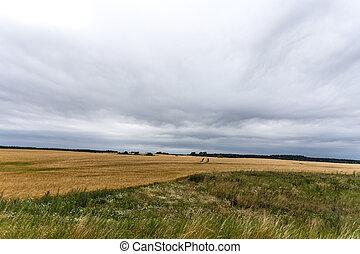mecklenburg-vorpommern - kornfelder