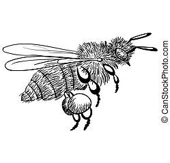 med, grafické pozadí., monochróm, čerň, obořit se, včela, osamocený, neposkvrněný, ilustrace