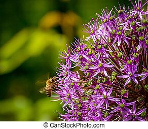 med, květ, hejno, včela