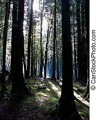 medborgare, fjäll., skog, huv