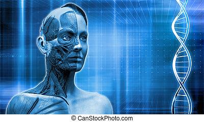 medical anatomy background - human body anatomy background...
