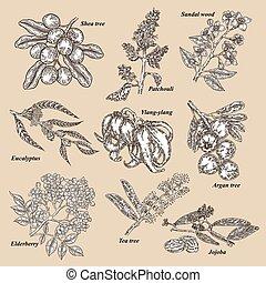 Medical and cosmetics plants. Hand drawn Jojoba, Argan, Tea tree, Sandal wood, Eucalyptus, Patchouli, Ylang-ylang, Shea, Elderberry branch. Vector illustration.