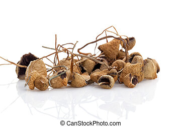 Medical dried magic mushrooms.