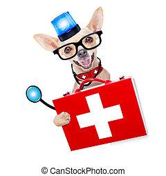 medical emergency doctor dog
