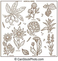 Medical herbs and herbal medicine plants sketch icons. Vector set of shea tree seeds or fruits, red clover and hops or aloe, organic artichoke or chamomile and echinacea, natural dandelion and lavender