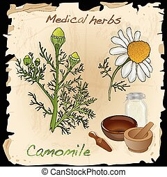 Medical herbs collection. Camomile.