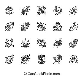 Medical herbs flat line icons. Medicinal plants echinacea, ...