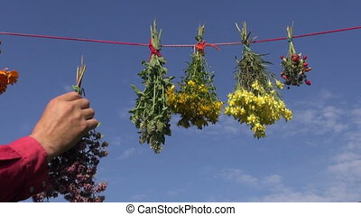 medical herbs hanging on string