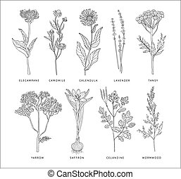 Medical Herbs Vector Set. Hannd drawn Monochrome Style