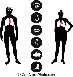 Human male and female body outline with icons of various human body parts.