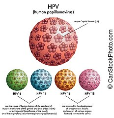 medical illustration of different types of HPV (human papillomavirus)