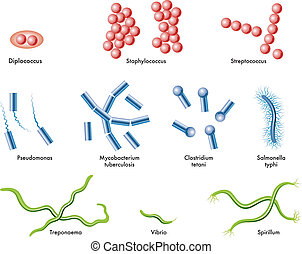 medical illustration of some types of bacteria