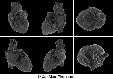 medical illustration of the heart