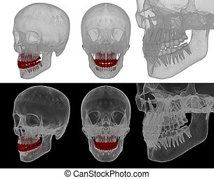 medical illustration of the tooth