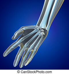 A Medical illustration of the Wrist Region