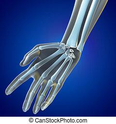 Medical illustration Wrist Region - A Medical illustration...