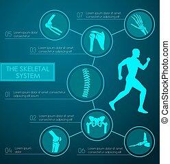 Medical infographic of human skeletal system