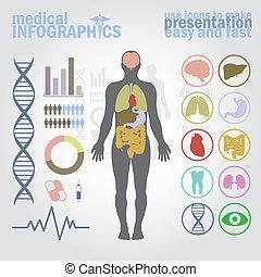Medical infographics. Presentation set. Human body with internal organs plus buttons. Diagram (graph), cardio gram.