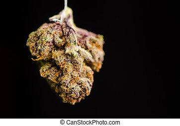Twisted Purple OG - Medical Marijuana shot in Denver, strain...