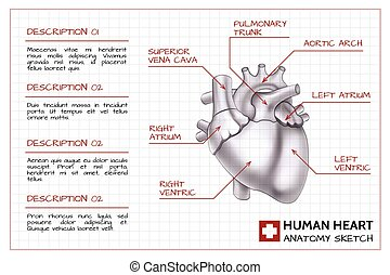 Medical organ infographics with text and human heart anatomy on paper sheet isolated vector illustration