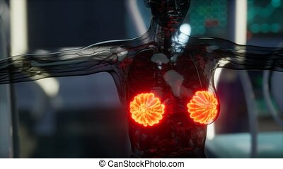medical scan of Woman Breast