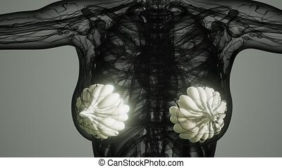 medical scan of Woman Cancer