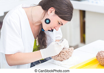 medical student dissecting a human brain