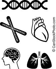 medical symbols of human organ and dna chromosome