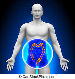 Medical X-Ray Scan - Colon