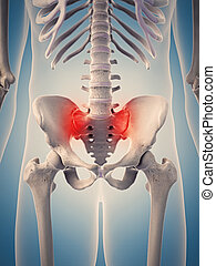 the highlighted human hip - medically accurate 3d...