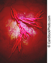the mycobacterium - close up