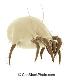 a common dust mite - medically accurate illustration of a...