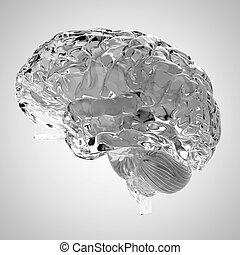 a glass brain